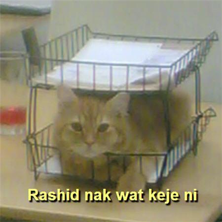 Rashid nak wat keje ni..