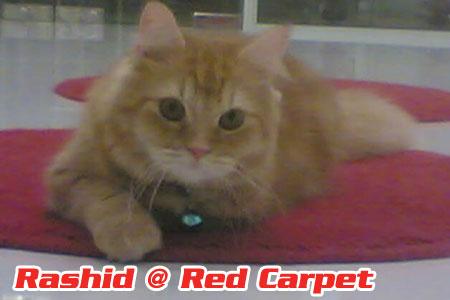 Rashid @ Red Carpet