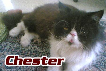 Kawan Rashid - Chester